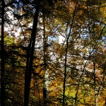 Blätterschloss