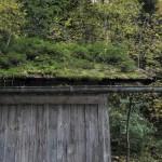 Dachbegrünung 2