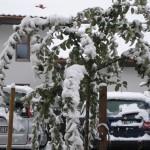 Der erste Schnee2