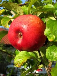 Apfel als Wegzehrung