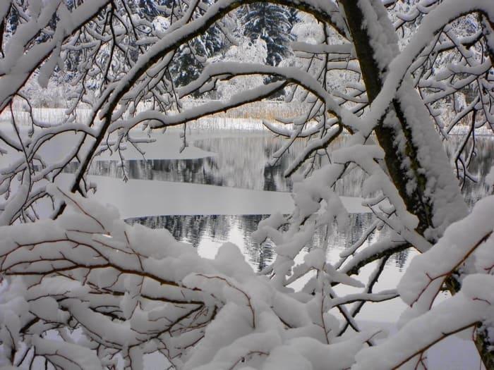 Abk Hlung leise rieselt der schnee schütz gästehaus schwangau neuschwanstein bayern